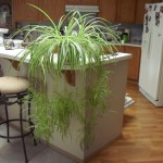 Best indoor plants for the house and office decoration