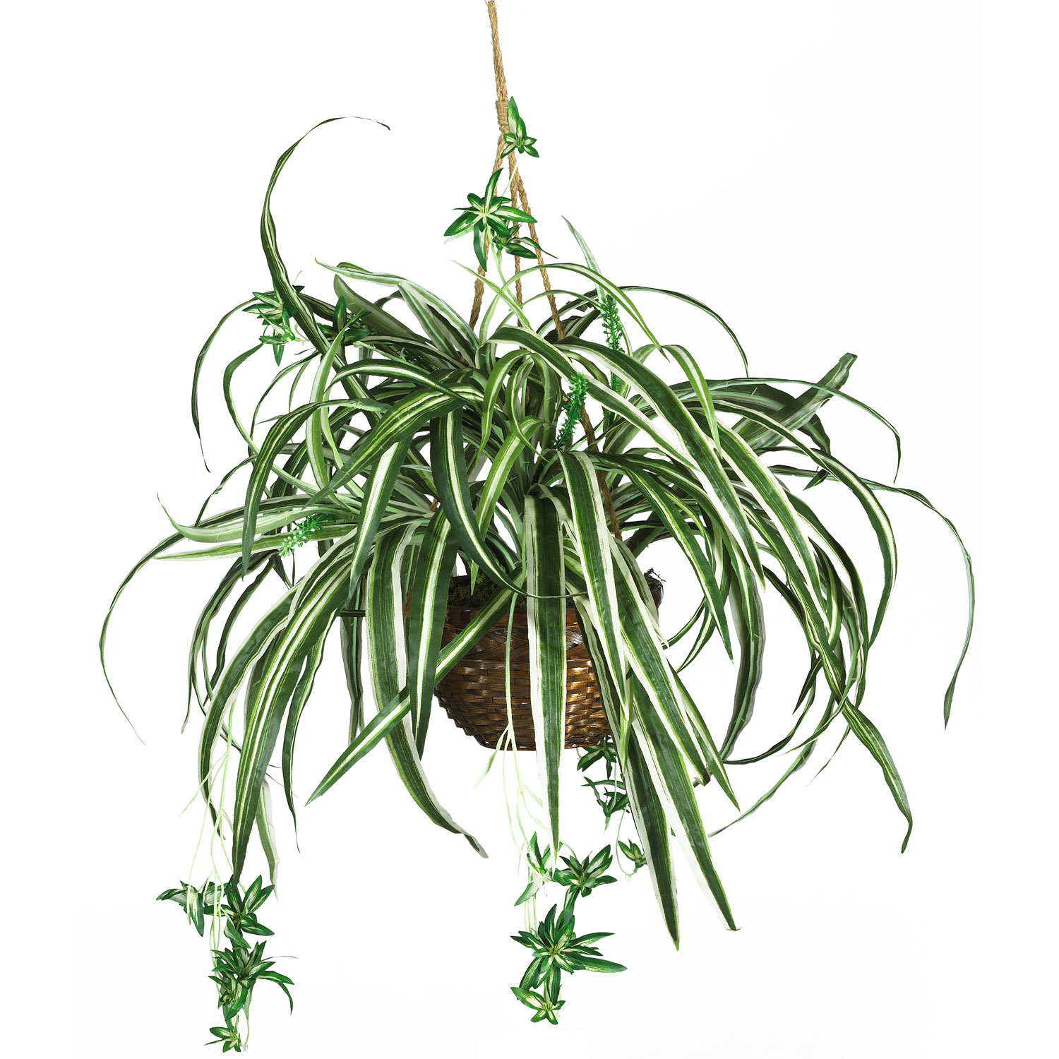 Keep these indoor plants in your home to get fresh air.