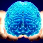13 amazing facts about human brain.