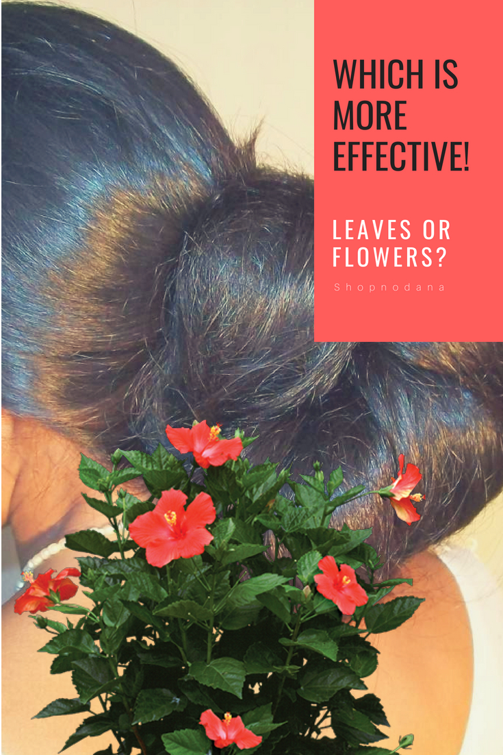 Hibiscus flowers or leaves_for hair