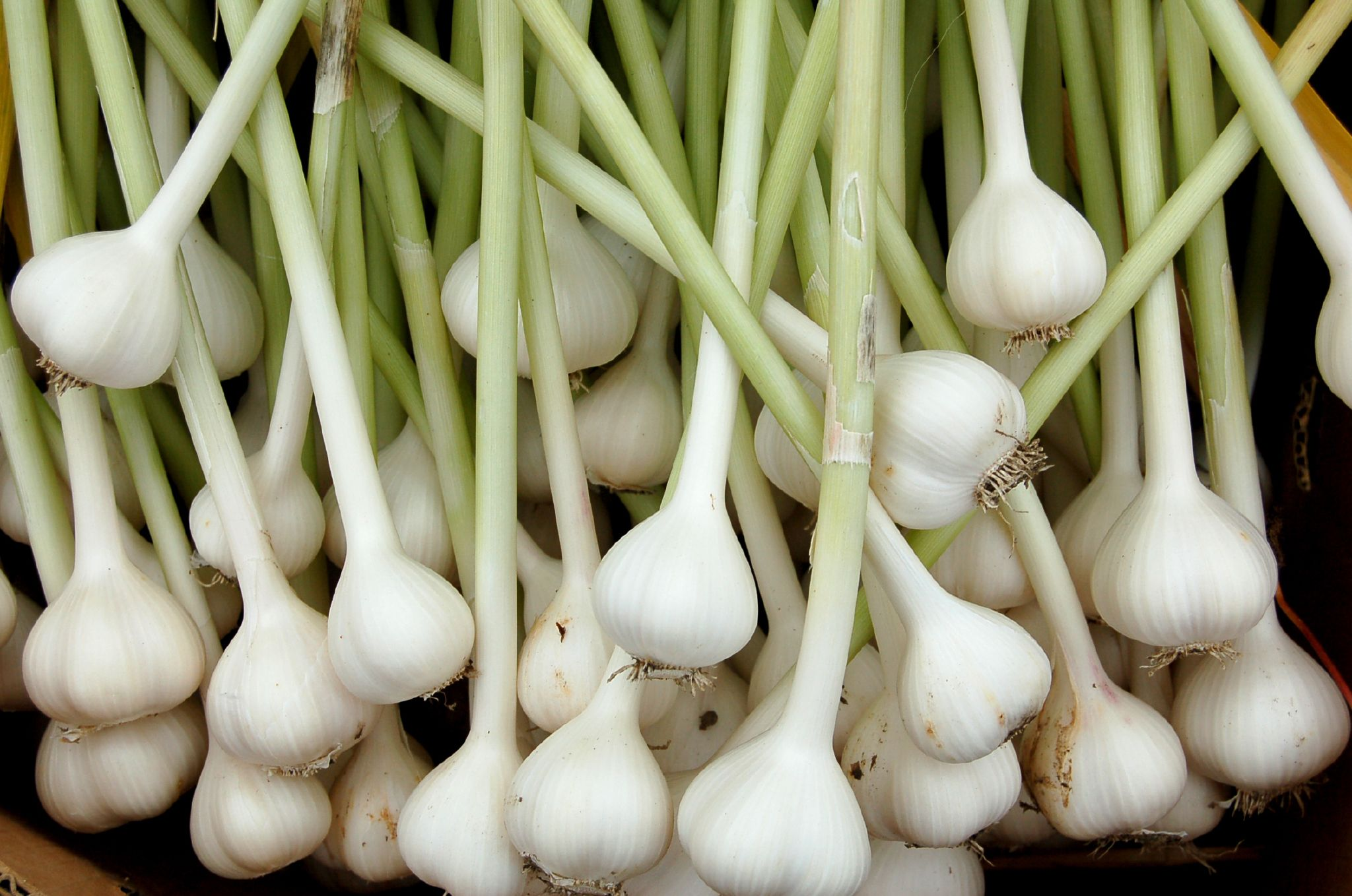 Regrowth your hair by eating these foods naturally